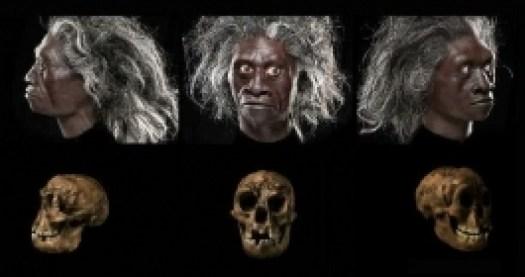 crane-et-reconstitution-faciale-d-h-floresiensis_1445_h140.jpg