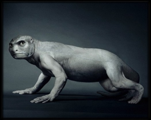 evolution-animal.jpg