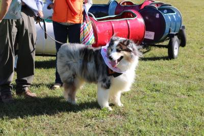 Dog and Barrell Train