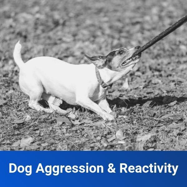 Aggressive Dog Training