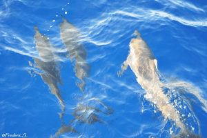 Dolphins preceding the boat