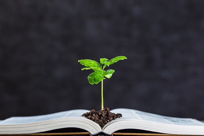 Books and plant