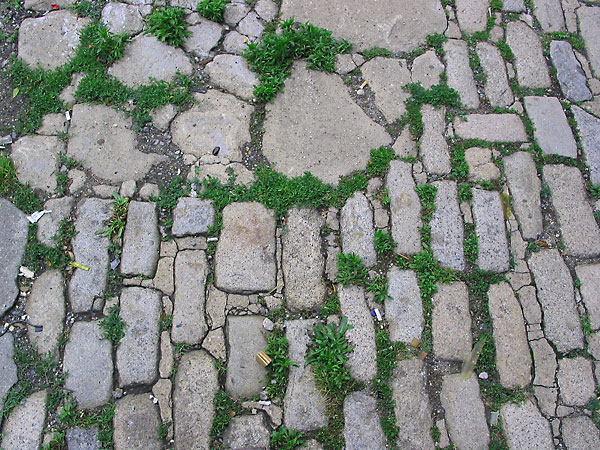 Cobblestone Grass, 2002, photo by Fred Hatt