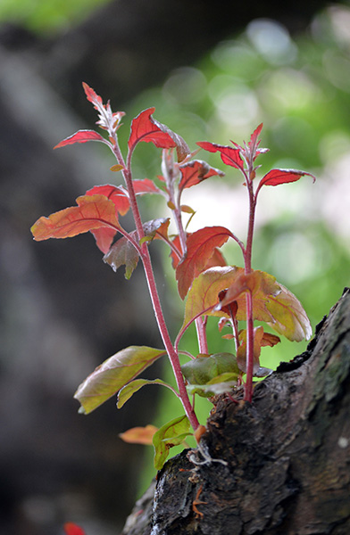 Red Shoots, 2012, photo by Fred Hatt