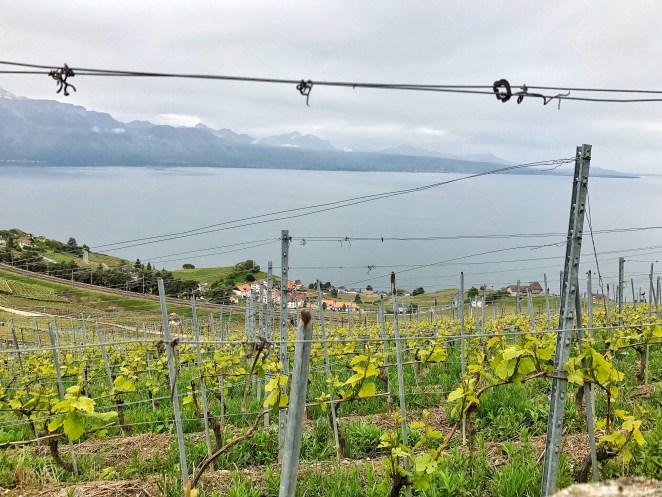 Vue depuis le domaine Porta sur les vignes du Lavaux et Lac Léman