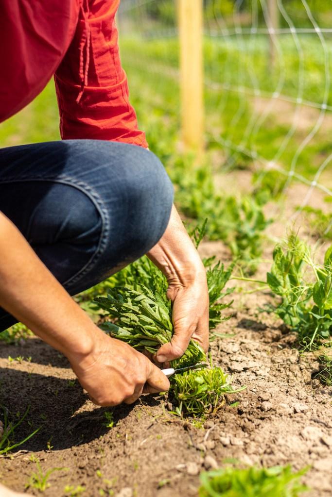 Fotoreportage landbouw