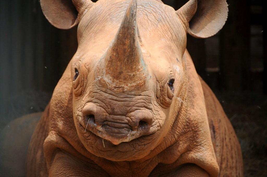 Smiling rino