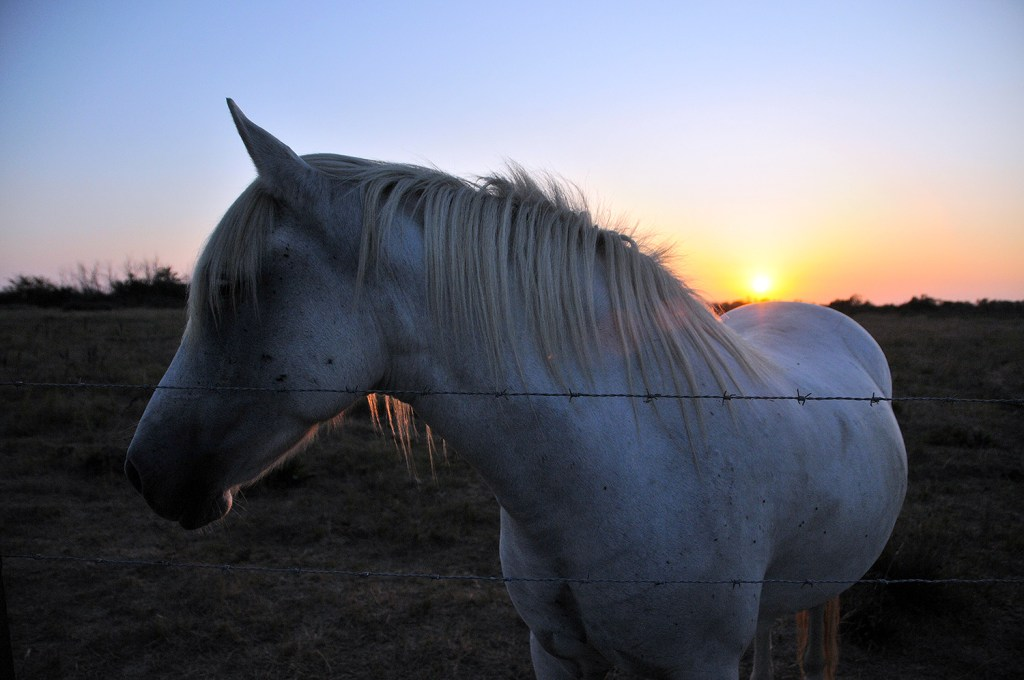 Sunset over the horse