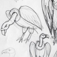 Hyènes et vautours