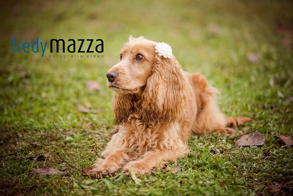Fotografo animales mascotas Fredy Mazza