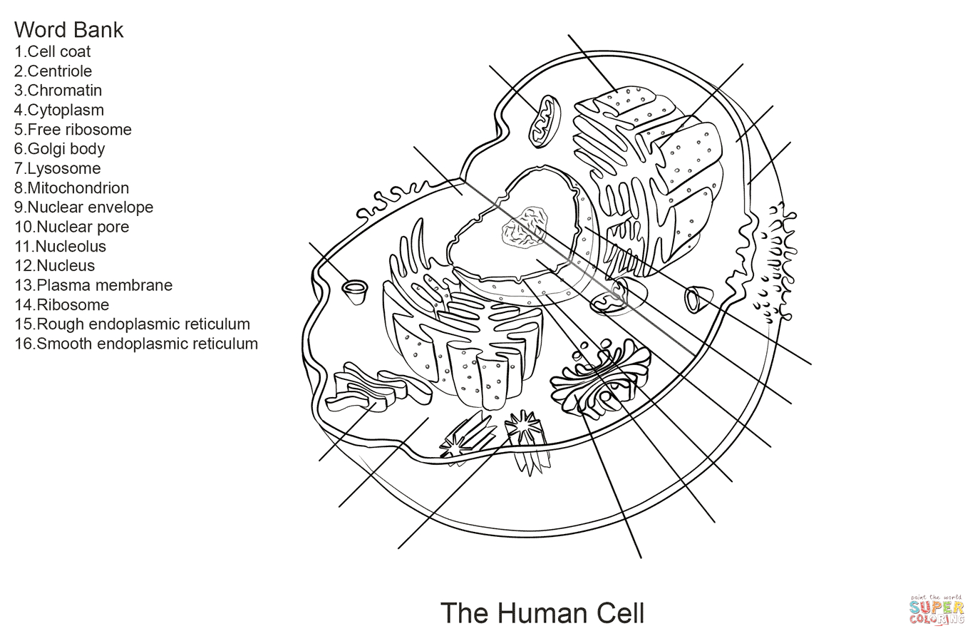 31 Plant Cell Coloring Pages Plant Cell Coloring 3 Free