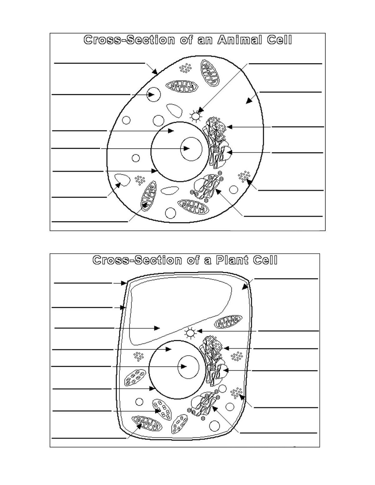 Worksheet Animal Cell Coloring Worksheet Answers Animal