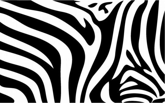 zebra021-540x337
