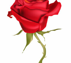 Red Rose Flower Art