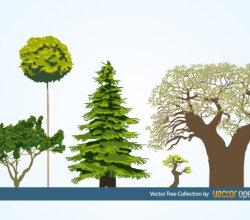 Free Vector Tree Illustration