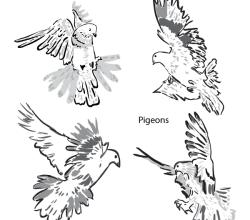 Artistic Pigeons Vector Art