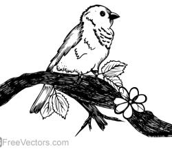 Cute Bird on Tree Branch Vector Art