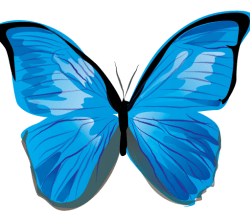 Vector Butterfly Illustrator