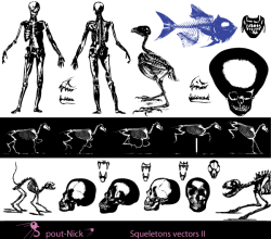 Vector Skeleton Clip Art