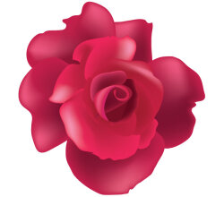 Vector Rose Flower Image