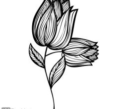 Hand Drawn Rose Flower Design
