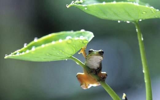 wallpaper-frog-photo-03