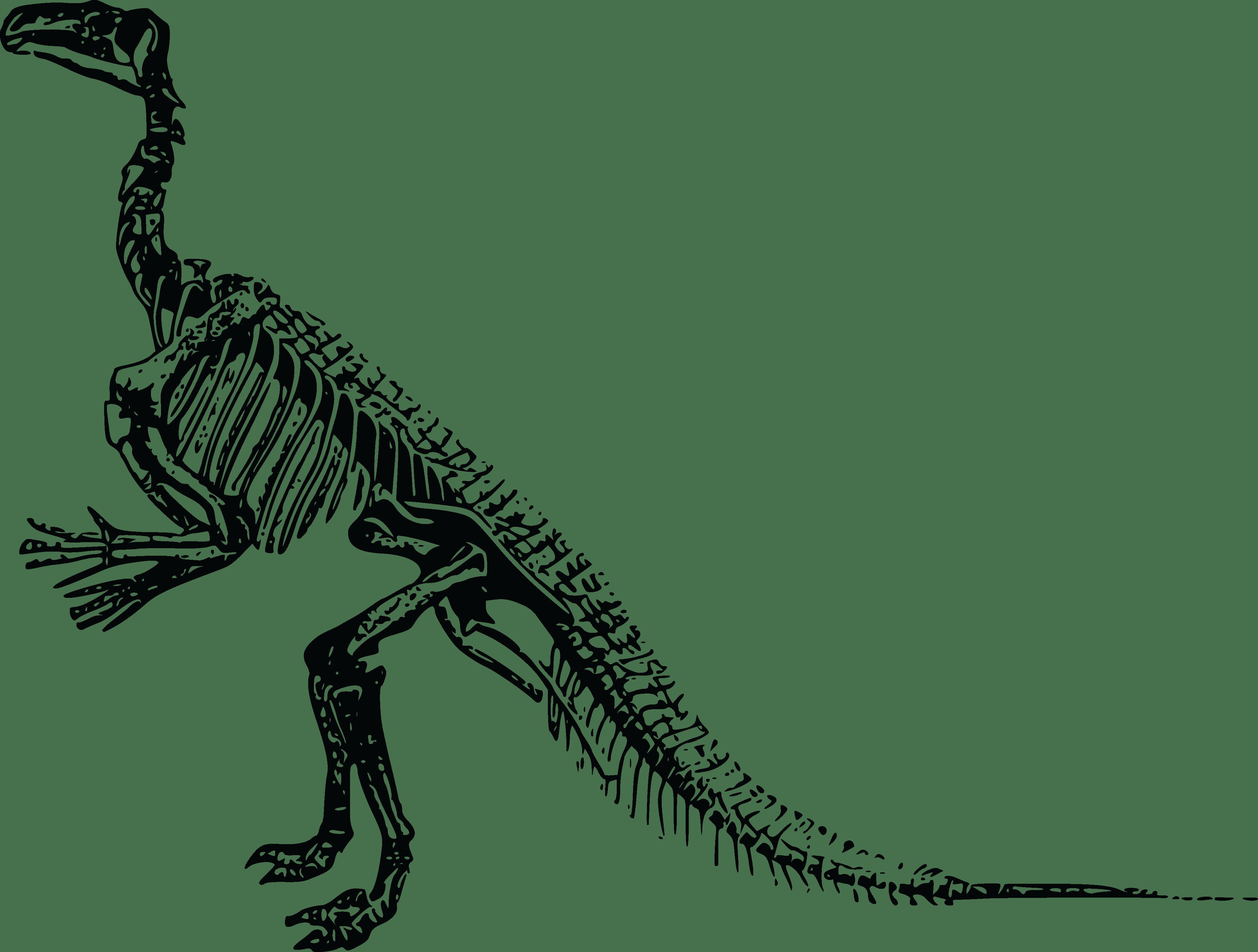 Free Clipart Of A Dinosaur Skeleton