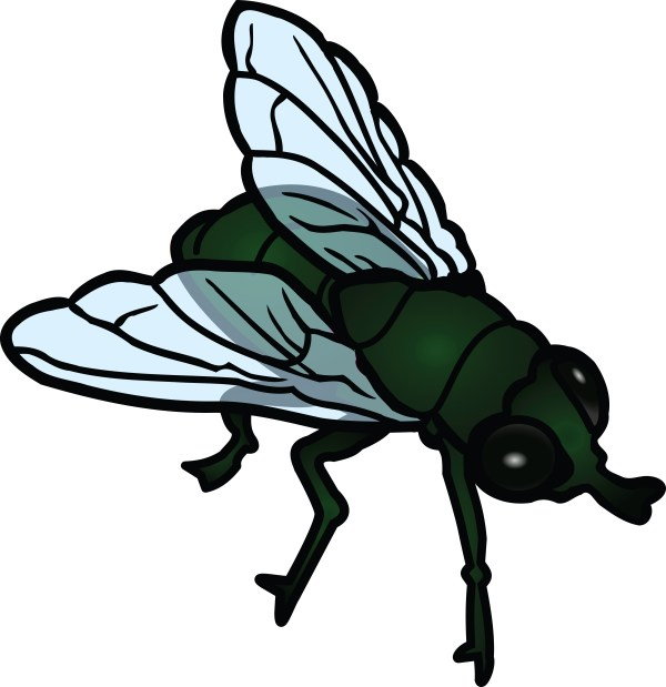 free clipart of fly