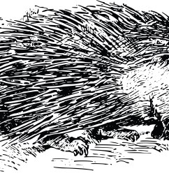 porcupine clipart [ 4000 x 1960 Pixel ]