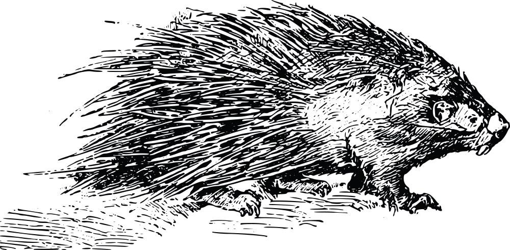 medium resolution of porcupine clipart