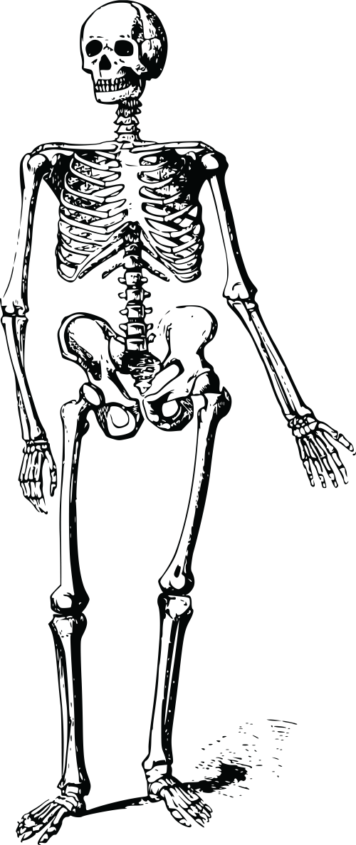 small resolution of free clipart of a skeleton 00011748