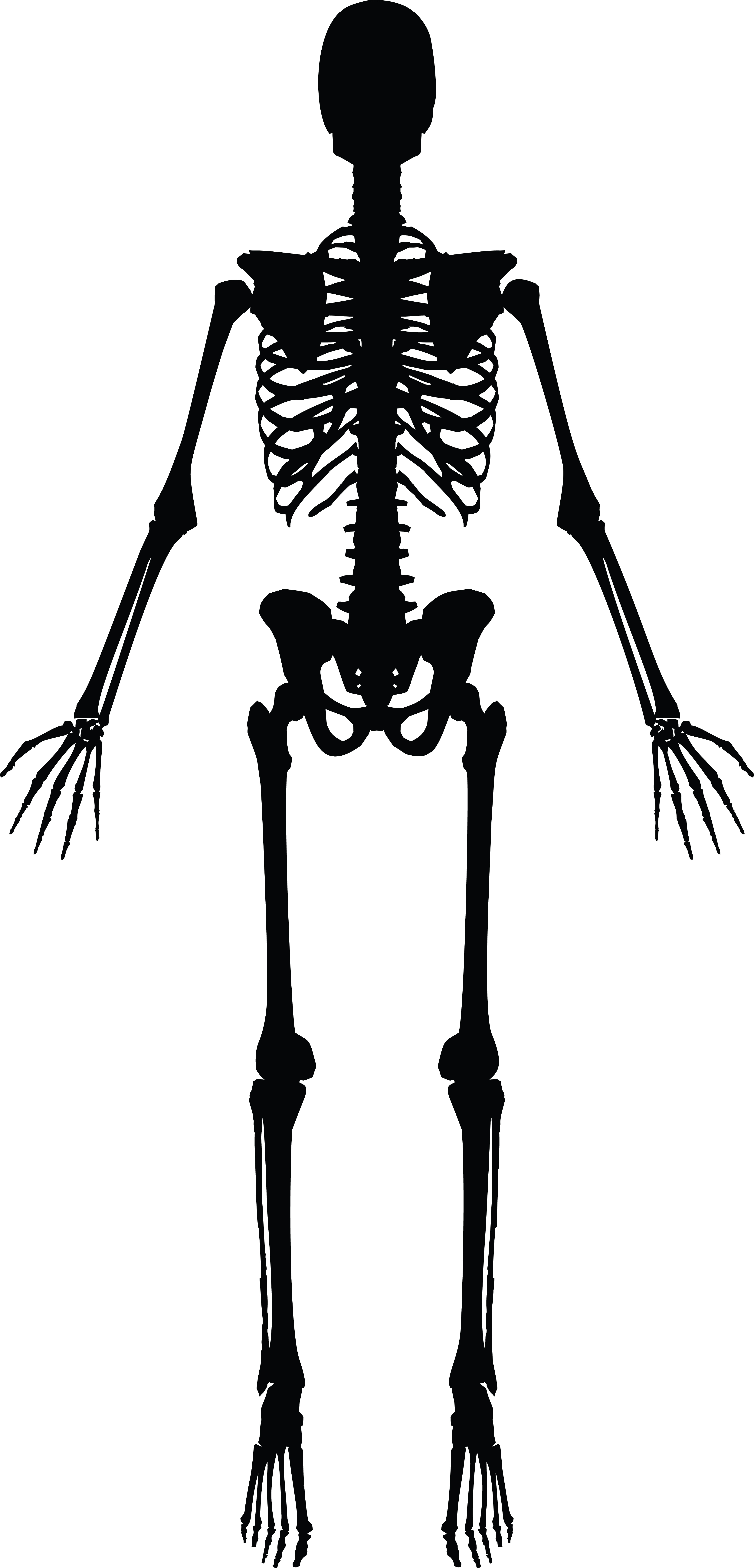Free Clipart Of A Human Skeleton Black And White