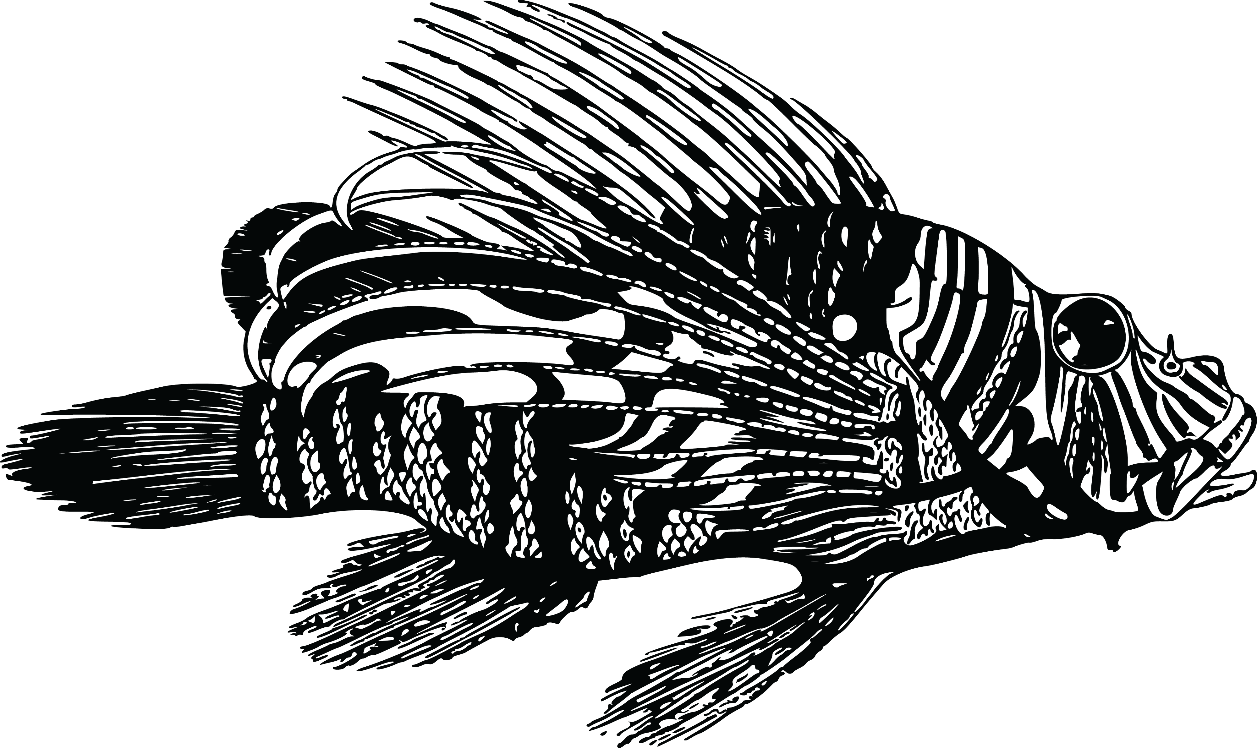 Free Clipart Of A Lionfish