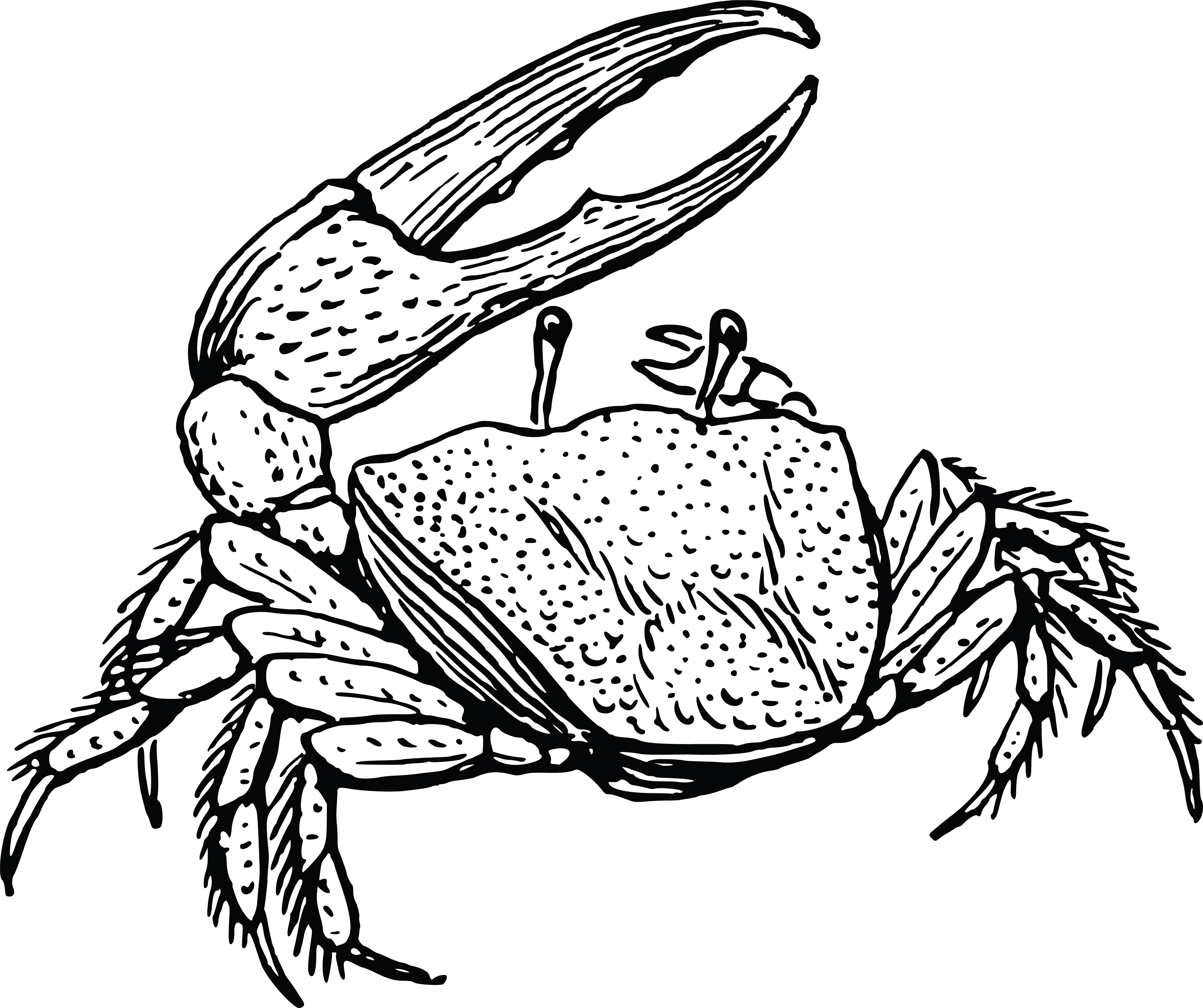 Free Clipart Of A Crab