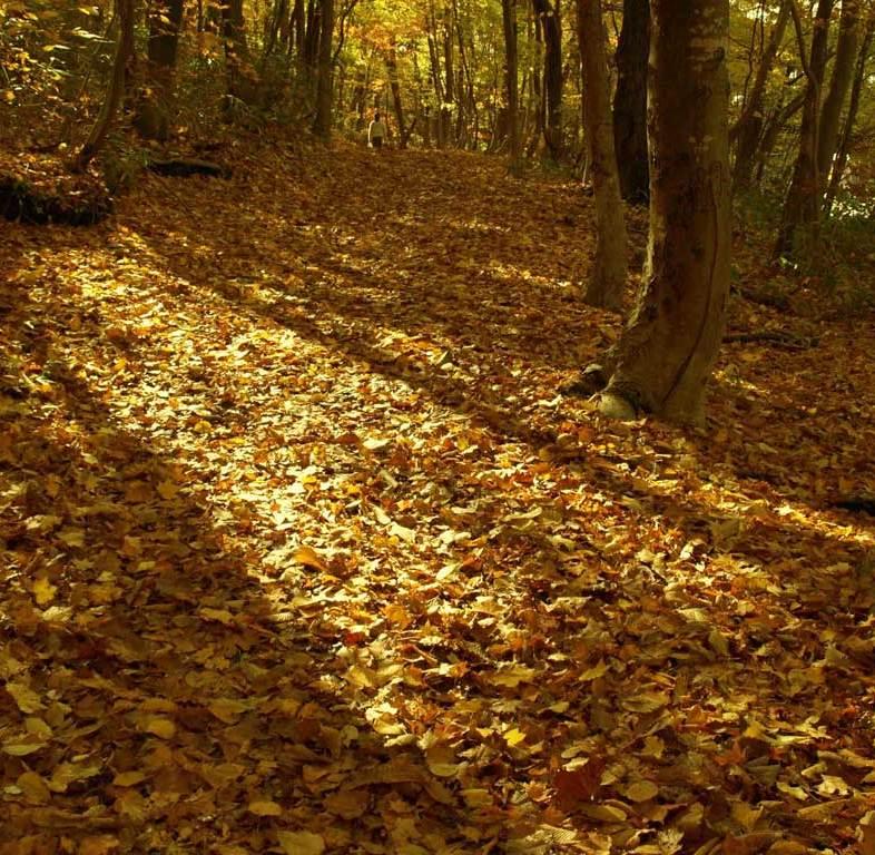 紅葉の森 落葉