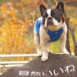 札幌南区の公園 フレンチブルドッグ