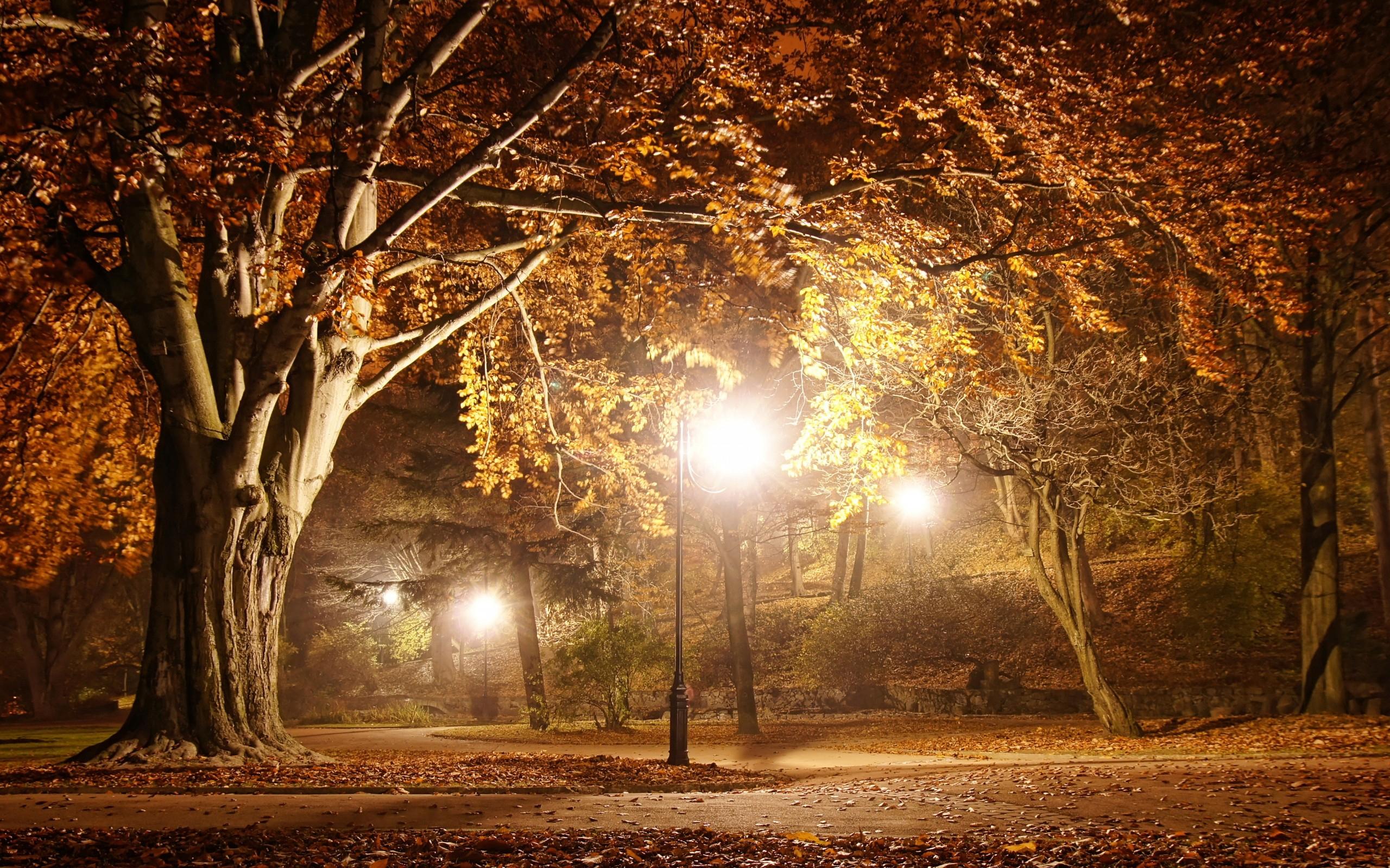 Fall Wallpaper Hd For Galaxy S4 Night Park View Hd Wallpaper