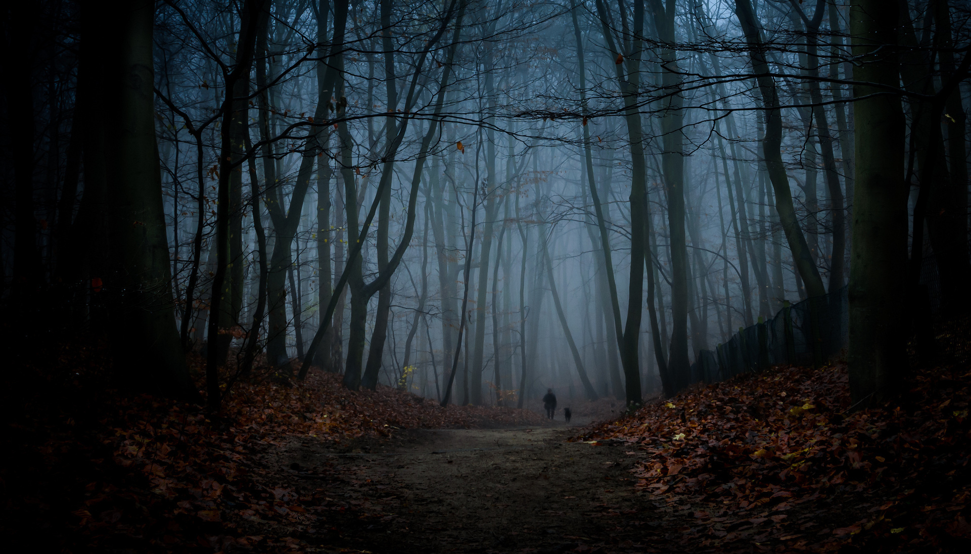 night forest road hd