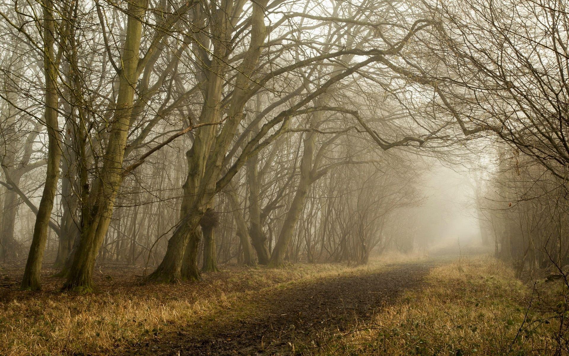 Fall Wallpaper Hd For Galaxy S4 Beautiful Forest 16302 Hd Wallpaper