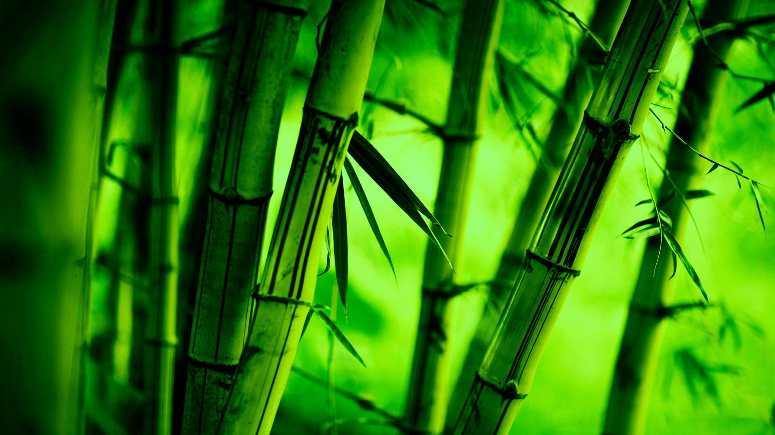 bamboo 4k wallpapers for