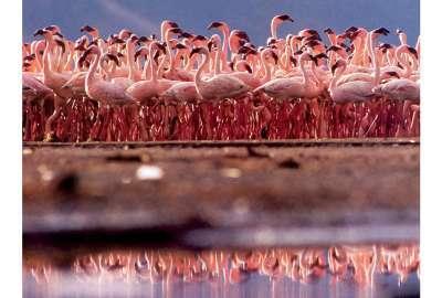 Cute Kitty Wallpapers Free New Caribbean Flamingos 4k Wallpaper