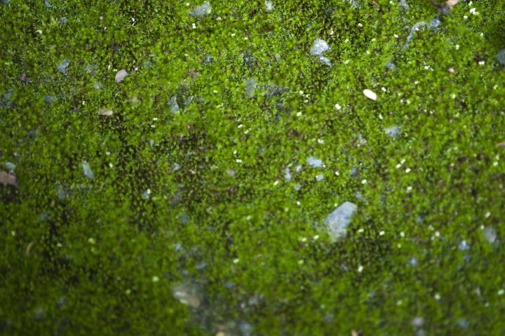 Image Of Lush Green Moss Background Texture Freebie