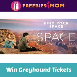 Sweeps Greyhound's Find Your Space