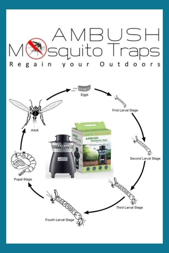 Ambush Mosquito Traps