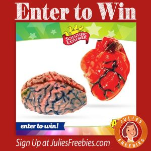 Win a Heart and Brain Kit from Alex Toys
