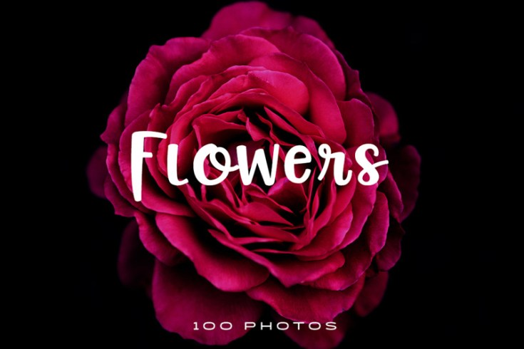 100 Free Flowers Stock Photos