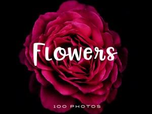 100 Free Flowers Stock Photos