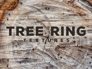 Free Tree Ring Textures