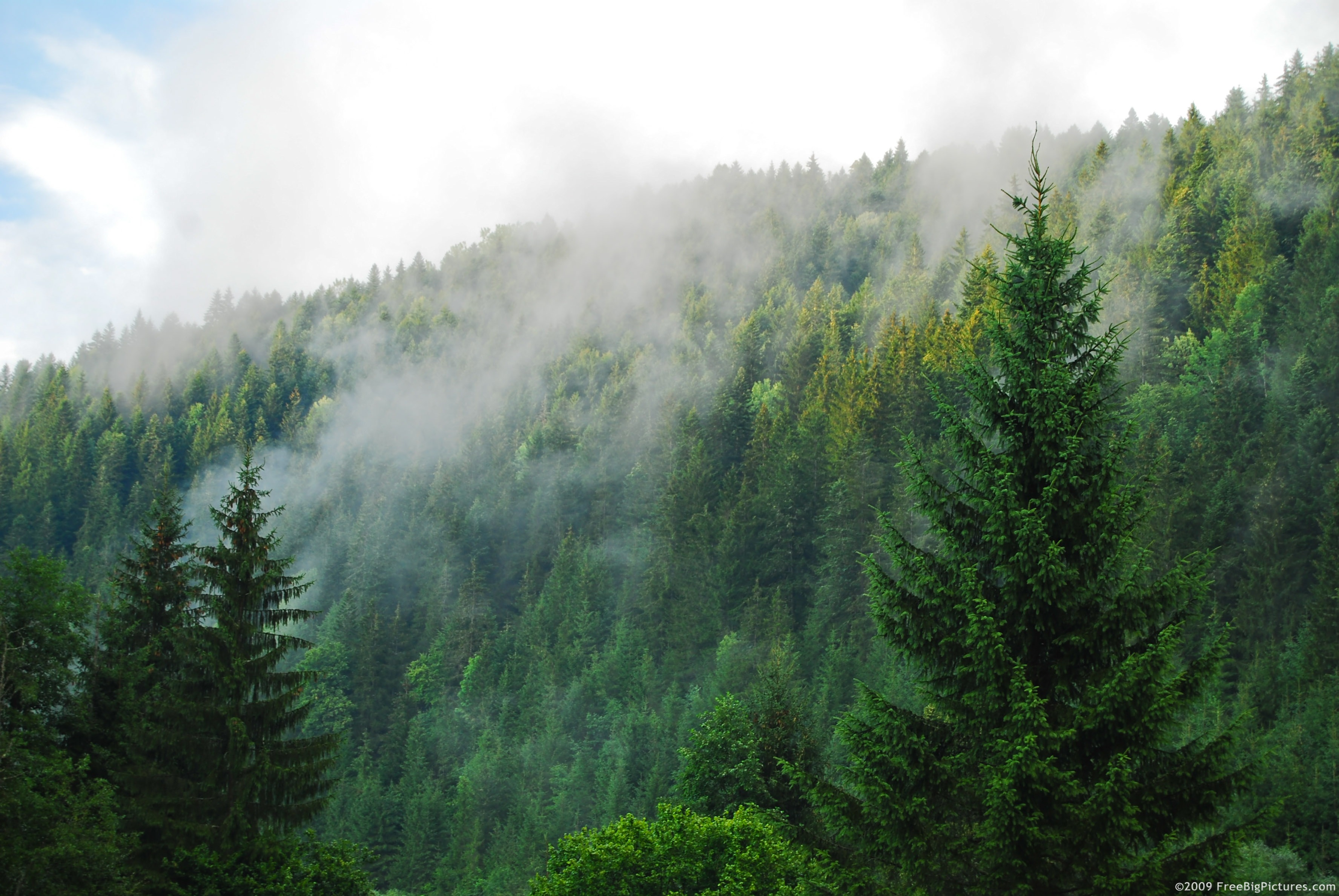 foggy mountain forest