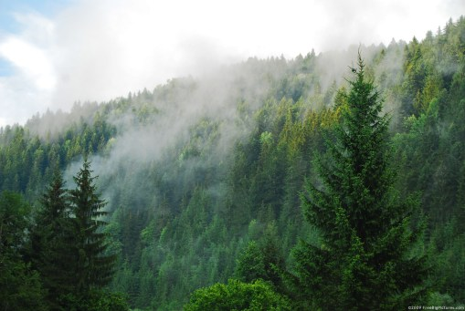 Habitats - coniferous forests